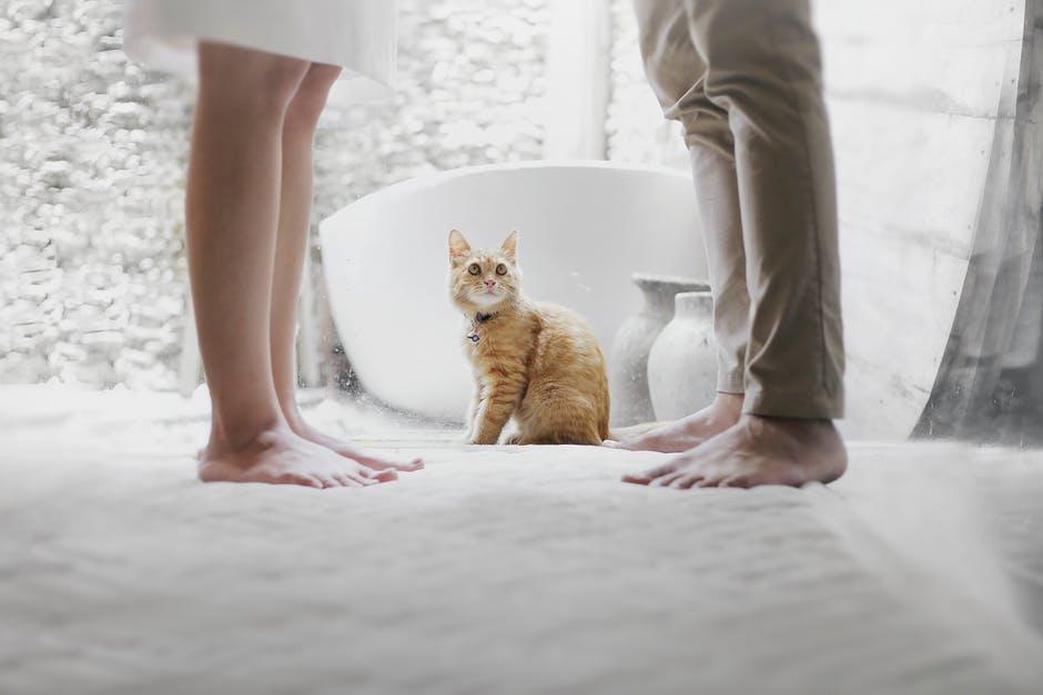 załatwiający się kot w kuwetę