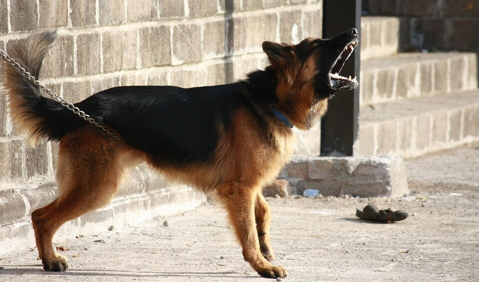 skuteczne odstraszanie domowych psów
